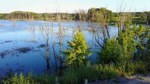 tote bäume im reservoir