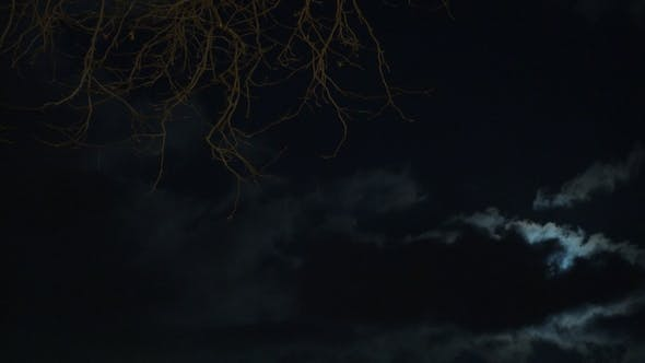 Thumbnail for Forest, Full Moon and Night Sky, Real Time