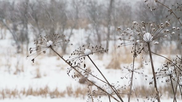 Thumbnail for Heavy Snowfall on Field with Dried Grass. Winter Natural Background