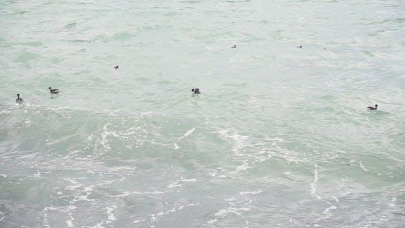 Thumbnail for Enten Rock auf den Wellen