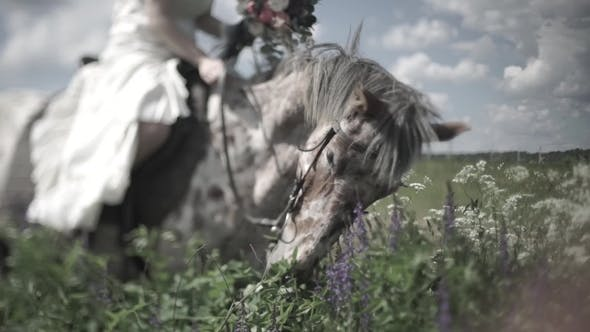Thumbnail for Horse Chewing the Grass on a Background of Nature.  of Head of Horse Eating Grass