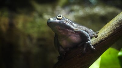 The Amazing Tree Frog Collection. Amazing Green Frog on Branch in Terrarium Amazing Frog Camouflage