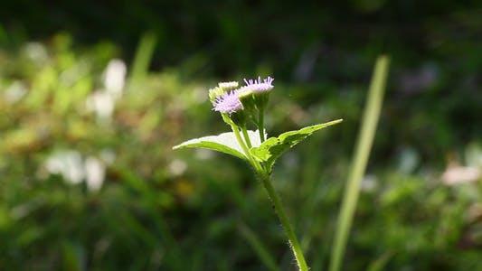 Thumbnail for Little Purple Flower I