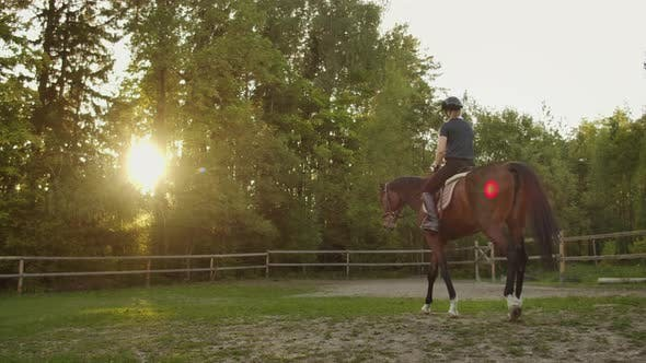 Thumbnail for Magical Equitation on a Sunny Day
