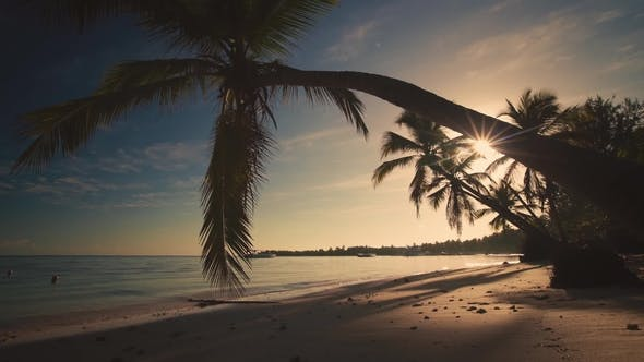 Thumbnail for Tropical Paradise Island View of Beach with Yachts and Palms , Seen From Under the Palm Trees