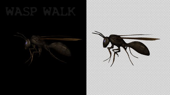 Thumbnail for Cartoon Wasp Walk
