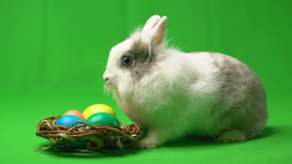Thumbnail for Easter Bunny Sitting Near a Nest with Colorful Eggs on a Green Background
