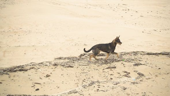 Thumbnail for Puppy on a Sandy Beach