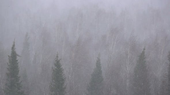 Snow Storm in the Forest Forest