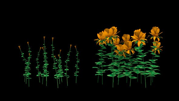 Thumbnail for Growing Yellow Flowers