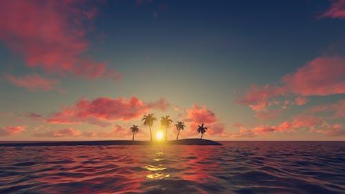 Palm Trees - Sunset Background