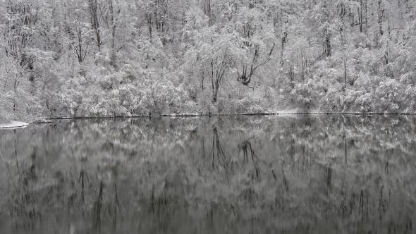 Thumbnail for Hoarfrost on the Branches of Trees Is Reflected in the Lake