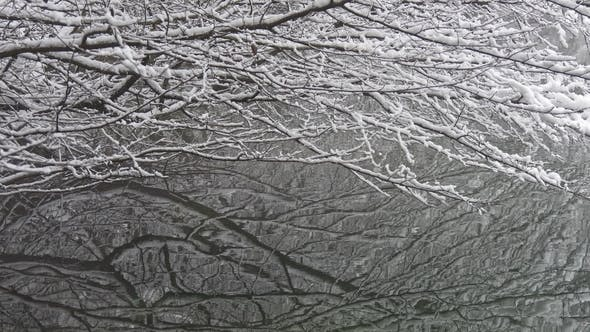 Thumbnail for Snow-covered Branches of the Tree Over the Water