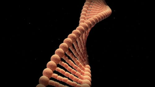 The DNA Molecule Able To Loop