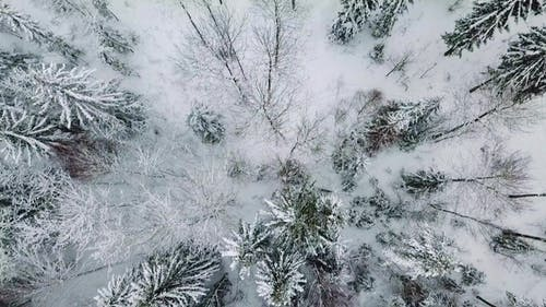 Flying Directly above Large Forest in the Cold Winter