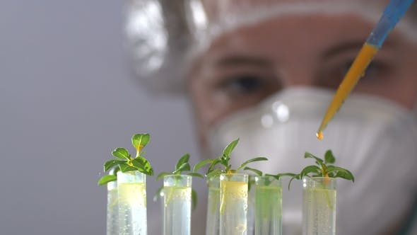 Thumbnail for The Biologist Pours the Reagent Into Test Tubes with Plants