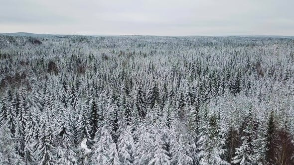 Flying Slow above Large Forest in the Cold Winter