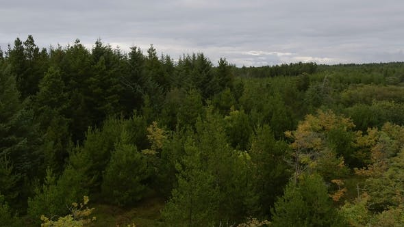 Thumbnail for Drone Over Woodland