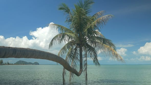 Single Palm Tree Hanging Over Lagoon