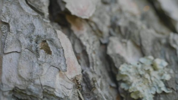 Ant's on the Bark of a Tree.  Ants on Green Tree Ants on Bark. Red Ants Crawling on the Bark of a