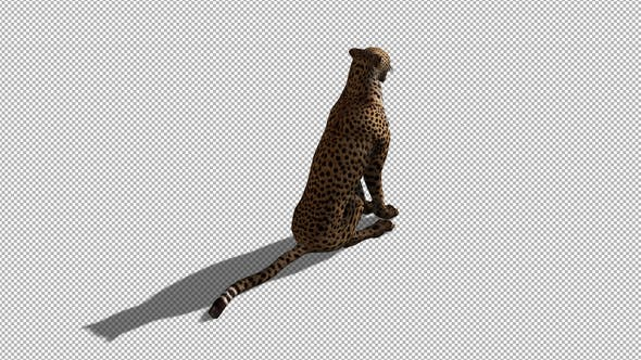 Thumbnail for 4K Cheetah Sitting