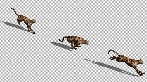Thumbnail for 4K Cheetah Running