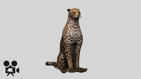 Thumbnail for 4K Cheetah Sit
