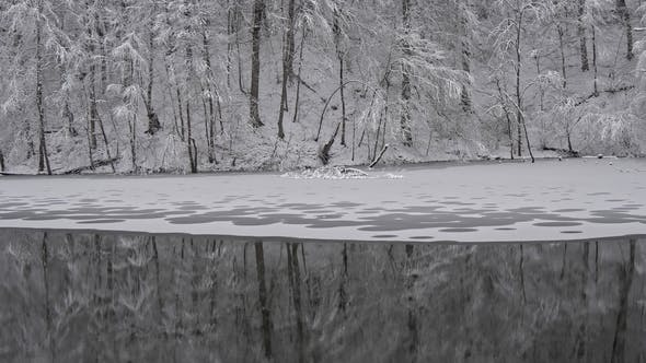 Thumbnail for Winter Forest and Winter Lake