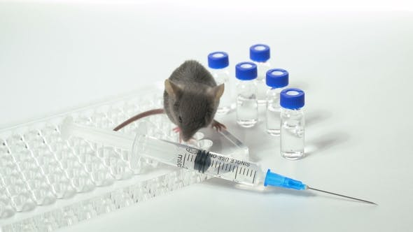 Thumbnail for Gray Laboratory Mouse with an Immunological Plate, a Syringe and Vials