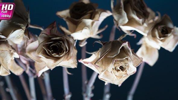 Thumbnail for Dry Rosebud