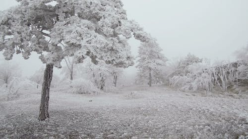 Surrealistic Mountain Glade. Windy Weather, Trees Covered with Hoarfrost.