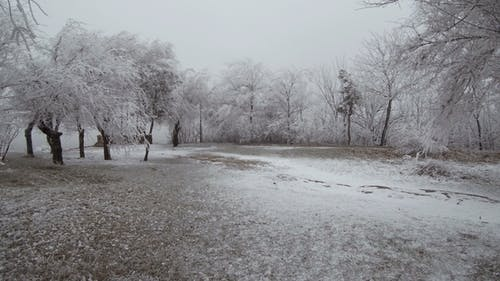Surrealistic Mountain Glade. Windy Weather, Trees Covered with Hoarfrost