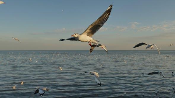 Thumbnail for Seagull Flying On Blue Ocean