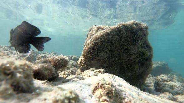 Thumbnail for Underwater Fish Life Asia Thailand Animal, Aquatic, Blue, Fish, Ocean, Reef, Sea, Tropical, Water