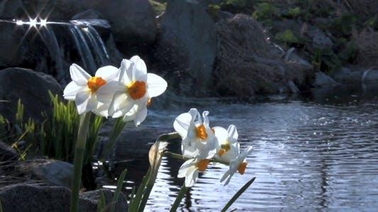 Thumbnail for Daffodil Lake - HD Pack 9