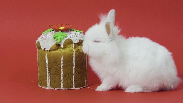Thumbnail for Easter Bunny Eats Cake on Red Background