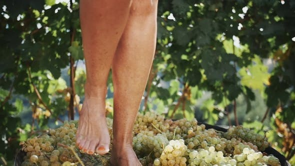 Thumbnail for Women Feet Stomping White Grapes in Wooden Shaft