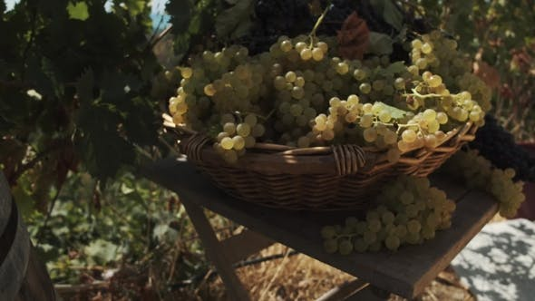 Thumbnail for Wooden Basket with Grapes on Table at Vinery Yard