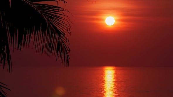 Thumbnail for Palm Leaf with Beautiful Sunset . Sun