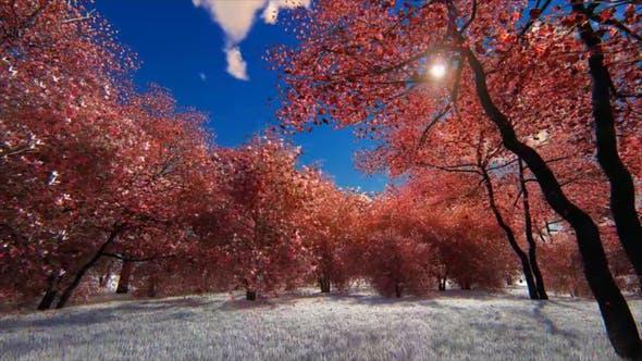 Thumbnail for Nature Season