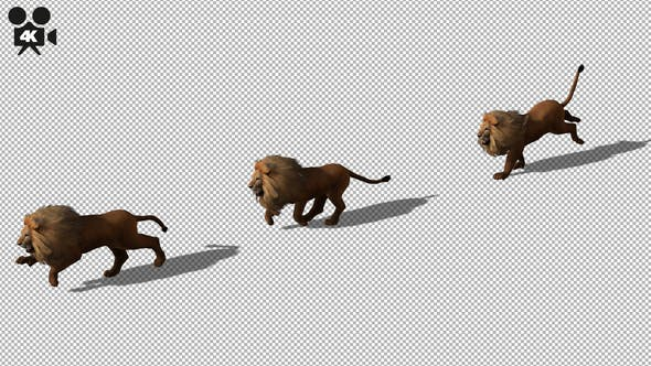 Thumbnail for 4K Lion Run
