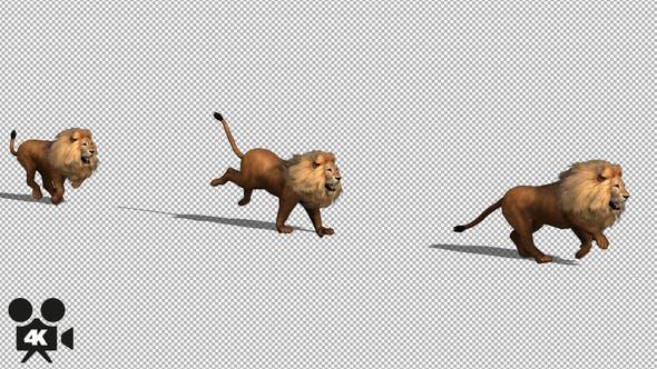 4K Lion Run
