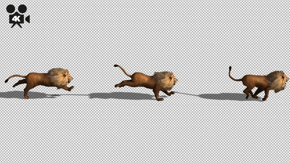 Thumbnail for 4K Lion Running Top Angle
