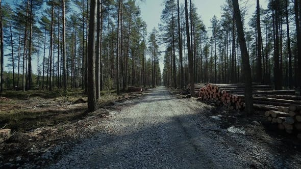 Thumbnail for Pine Logs Forest Boards Lumberjack Feller Loggers Work Forest Road