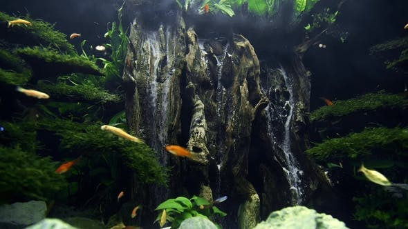 Colorful Fishes Swim in the Large Beautiful Aquarium with Artificial Waterfall From Wood