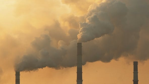 Thumbnail for Plant Emits Harmful Smoke