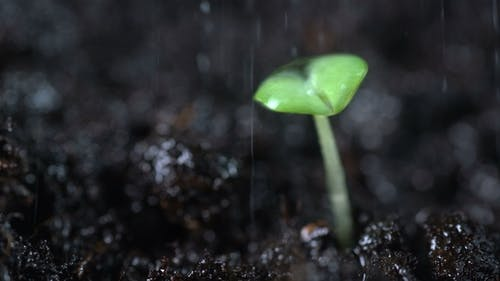 Gardener Water Plant Sprouts