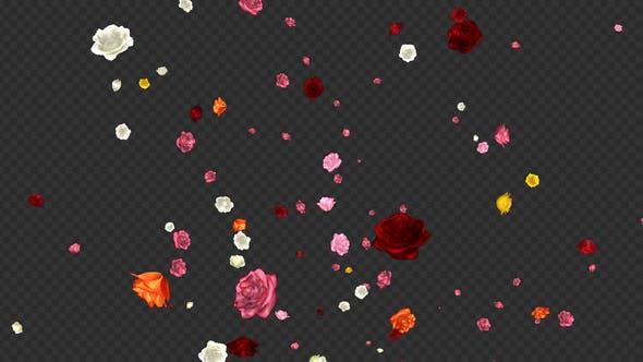 Thumbnail for Falling Roses - Multicolored Loop