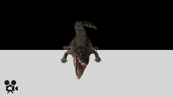 Thumbnail for 4K Crocodile - Alligator Attacking