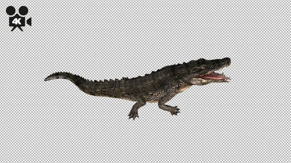 Thumbnail for 4K Crocodile - Alligator Eating - Top View